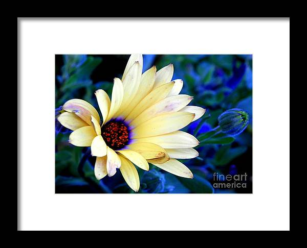 Blue Framed Print featuring the photograph Flower In The Mist by Claudia Sanchez