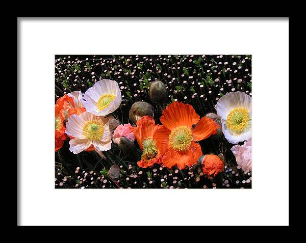 Flowers Framed Print featuring the photograph Flower Line Dance by Valia Bradshaw