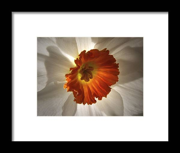 Flowers Framed Print featuring the photograph Flower Narcissus by Nancy Griswold