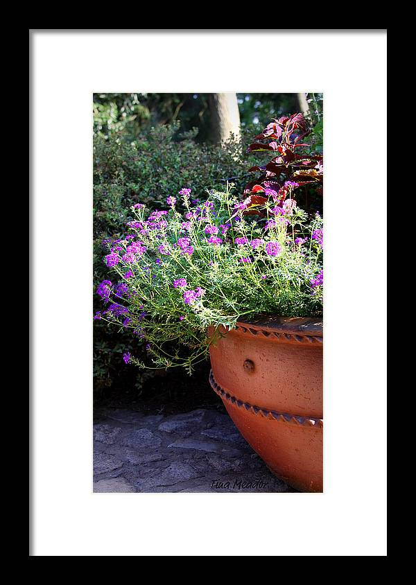 Flower Framed Print featuring the photograph Flower Pot by Tina Meador