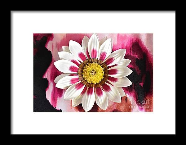 Gazania Framed Print featuring the photograph Flower Power by Brenda Lawlor