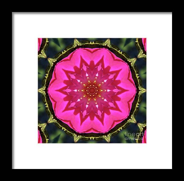 Flower Framed Print featuring the photograph Flower Power Kaleidoscope Artifact by Amy Delaine