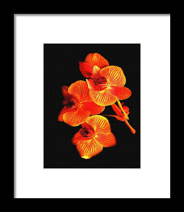 Flower Framed Print featuring the photograph Flower by Ralph Perdomo