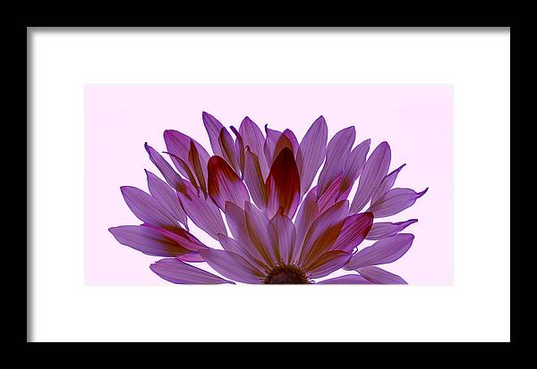 Flowers Framed Print featuring the photograph Flower Rise- Lavender by Vita Mancusi