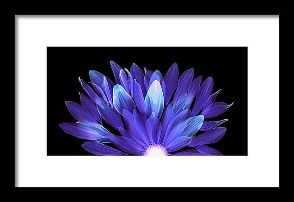 Flower Framed Print featuring the photograph Flower Rise - Purple On Black by Vita Mancusi