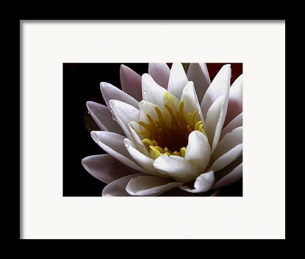 Flowers Framed Print featuring the photograph Flower Waterlily by Nancy Griswold