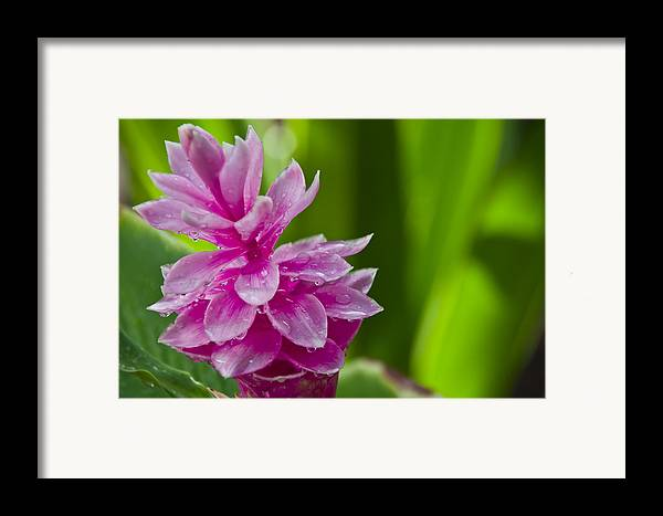 Flower Framed Print featuring the photograph Flower by Wes Shinn