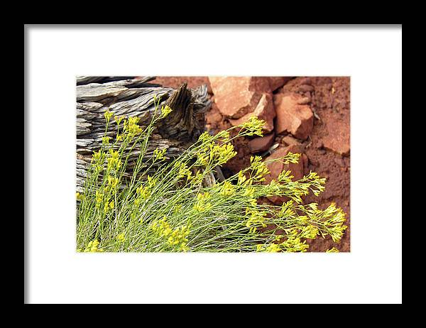 Flower Framed Print featuring the photograph Flower Wood And Rock by Marilyn Hunt