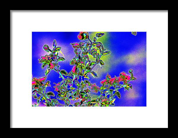 Brittle Bush Framed Print featuring the photograph Flowering Brittle Bush In An Altered State by Richard Henne