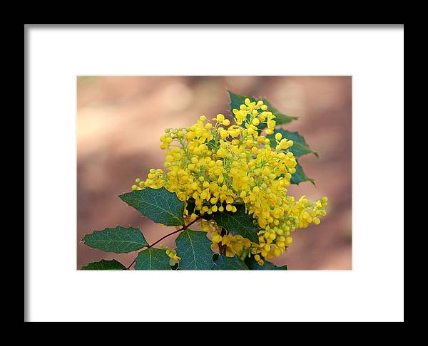 Nature Framed Print featuring the photograph Flowering Plant 032514a by Edward Dobosh