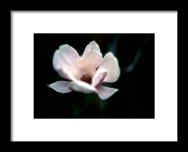 Floral Framed Print featuring the photograph Flowering Tree by Kim Blumenstein