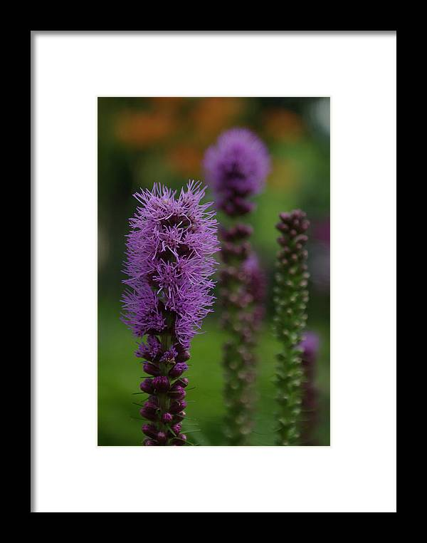 Nature Framed Print featuring the photograph Flowers 4 by Eric Workman
