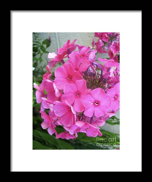 Pink Flowers Artwork Framed Print featuring the photograph Flowers All Around Me 2 by Reb Frost
