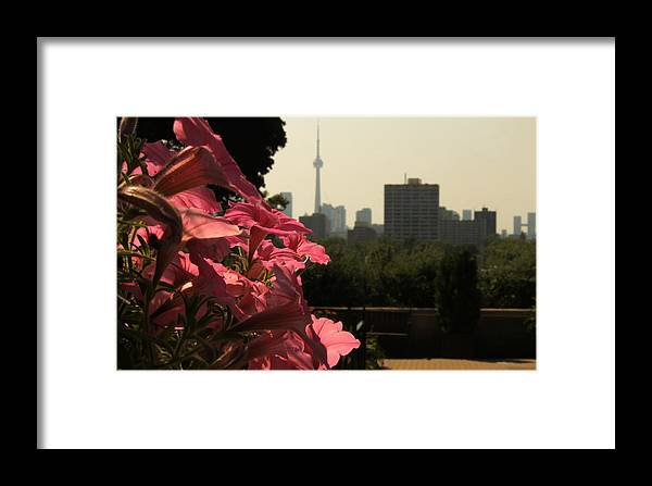 Flowers Framed Print featuring the photograph Flowers And The Toronto Skyline by Christine Buckley