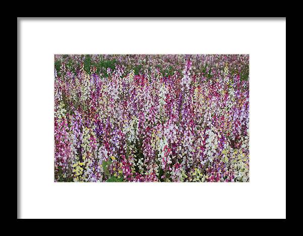 Field Of Flowers Framed Print featuring the photograph Flowers Forever by Carol Groenen