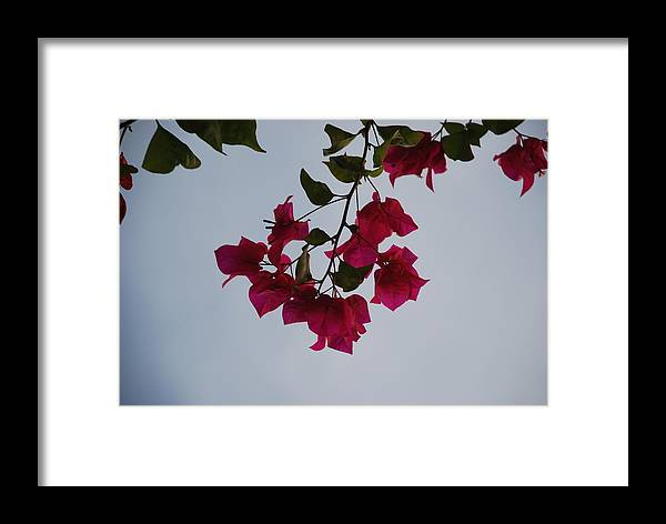 Flowers Framed Print featuring the photograph Flowers In The Sky by Rob Hans