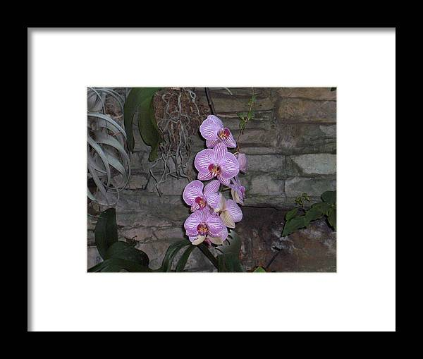 Flowers Framed Print featuring the photograph Flowers by Janet Hall