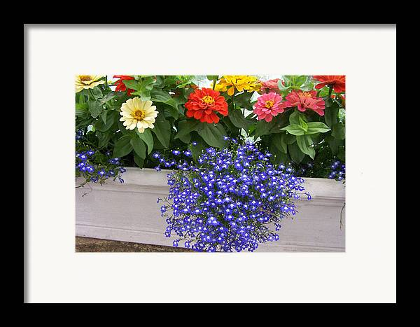Flowers Framed Print featuring the photograph Flowers Of Blue by Chuck Shafer