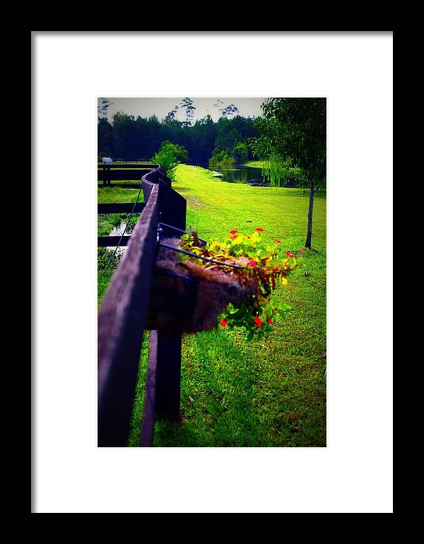 Nature Framed Print featuring the photograph Flowers On A Fence by Jill Tennison