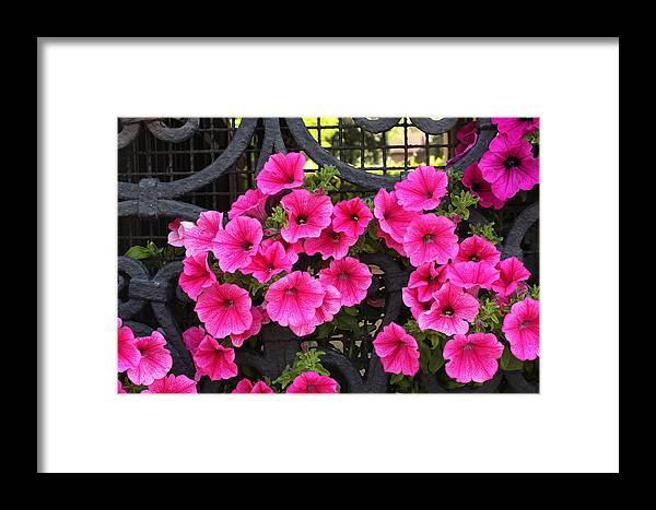 Flowers Framed Print featuring the photograph Flowers On Iron Grate In Venice by Michael Henderson