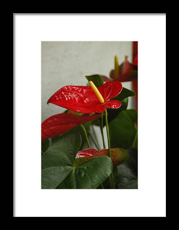 Foliage Framed Print featuring the photograph Flowers Rising by Lori Mellen-Pagliaro