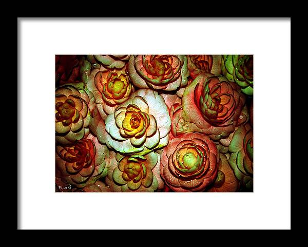 Roses Framed Print featuring the photograph Flowers by Ruben Flanagan