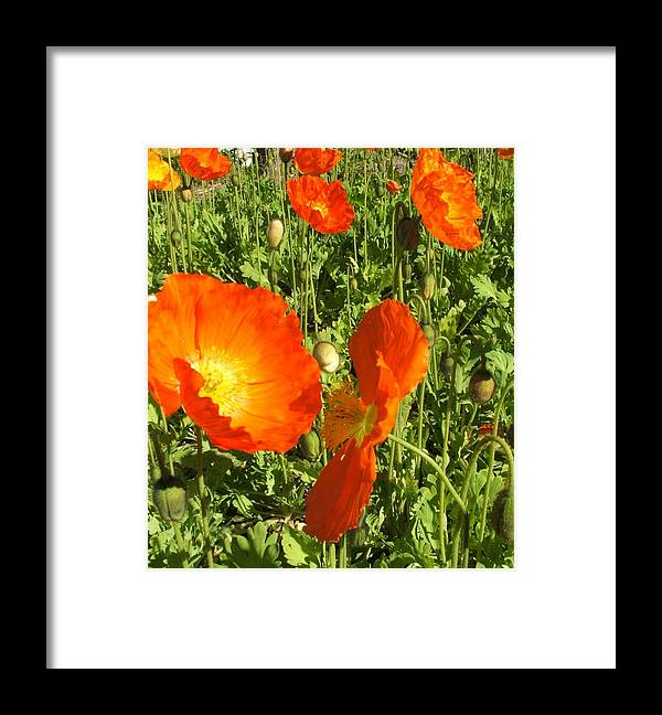 Flowers Framed Print featuring the photograph Flowers by Shari Chavira