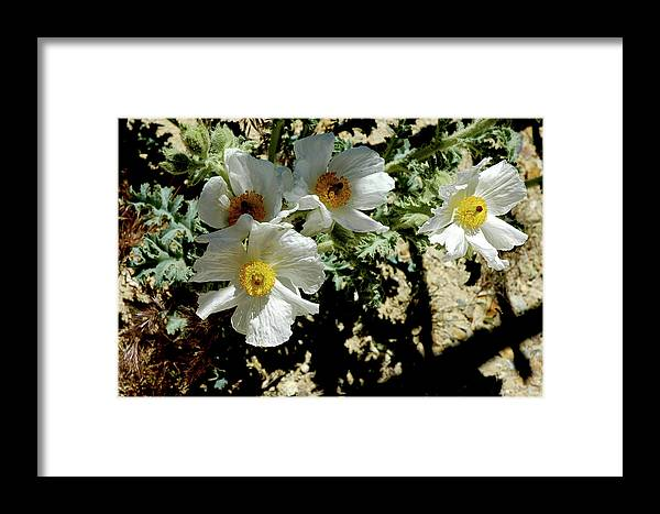 Usa Framed Print featuring the photograph Flowers Welcome You At The Gate by LeeAnn McLaneGoetz McLaneGoetzStudioLLCcom