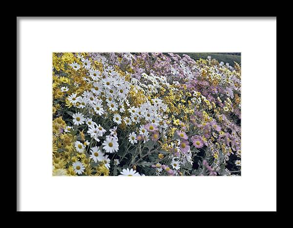 Flowers In Fall Framed Print featuring the photograph Flowers by Wes Shinn
