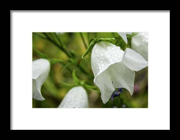Flower Framed Print featuring the photograph Flowers With Droplets 4 by Mark Denton