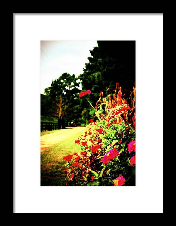 Flower Framed Print featuring the photograph Flowery Path by Jill Tennison