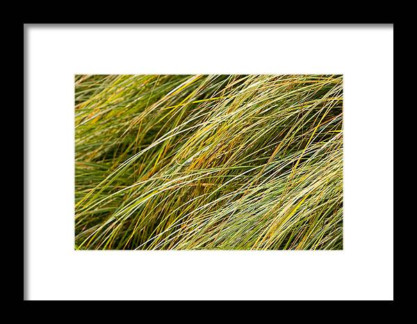 Abstract Framed Print featuring the photograph Flowing Green Grass Abstract by James BO Insogna