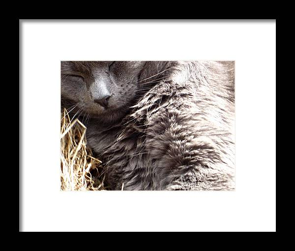 Framed Print featuring the photograph Fluffy Grey Putty Tat by Miss McLean