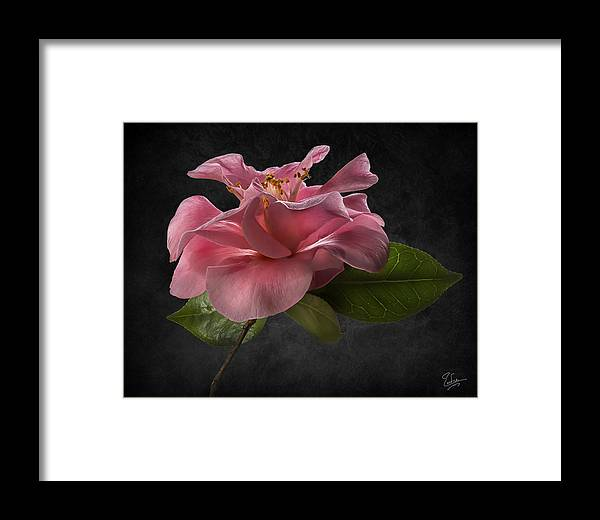 Pink Framed Print featuring the photograph Fluffy Pink Camellia 2 by Endre Balogh
