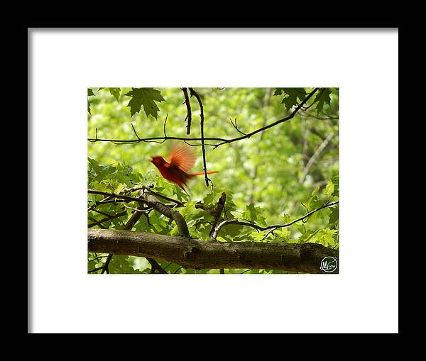 Ian Moone. Moones Realm Framed Print featuring the photograph Fly Away by Ian Moone
