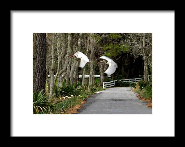 Birds Framed Print featuring the photograph Fly Fly Away by Diane Wallace