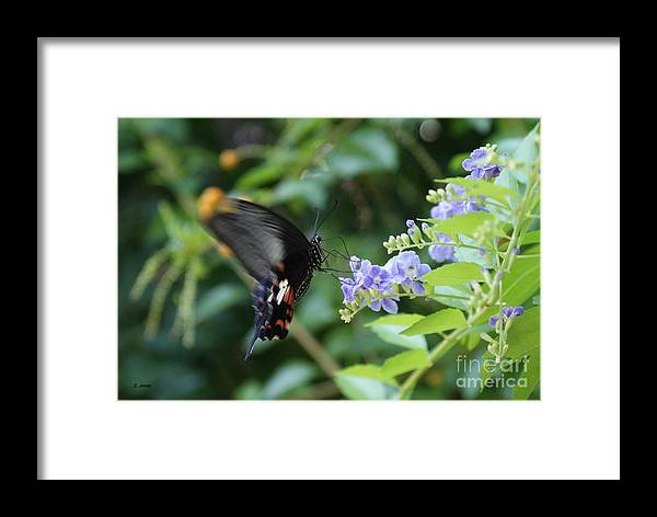 Butterfly Framed Print featuring the photograph Fly In Butterfly by Shelley Jones
