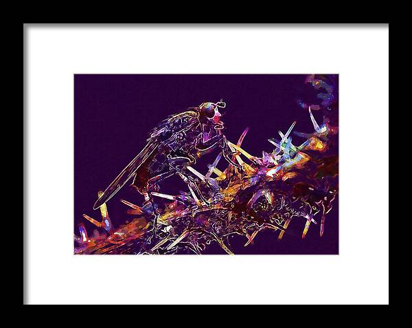 Fly Framed Print featuring the digital art Fly Insect Nature Macro Close by PixBreak Art