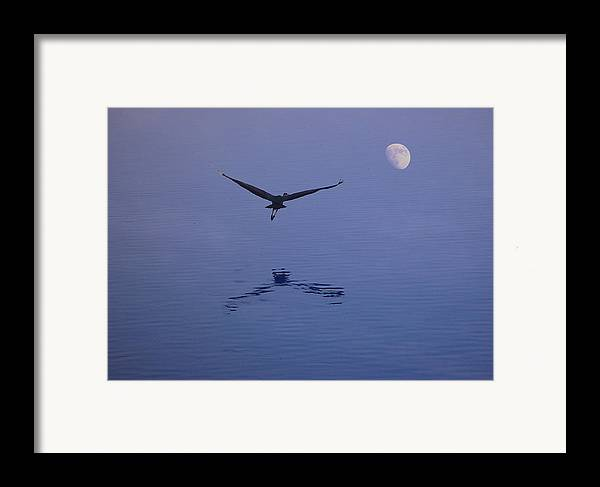 Nature Framed Print featuring the photograph Fly To The Moon by Eric Workman