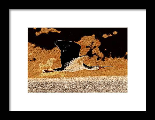 Africa Framed Print featuring the photograph Flying African Bird by James Hill