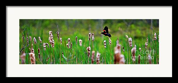 Sun Framed Print featuring the photograph Flying Amongst Cattails by James F Towne