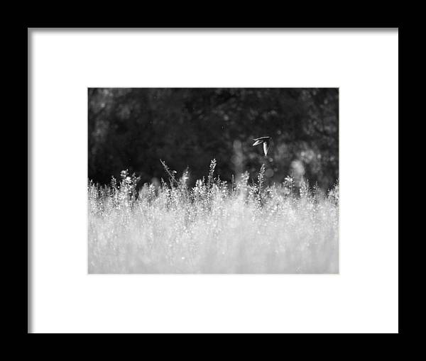 Bird Framed Print featuring the photograph Flying by Felix M Cobos