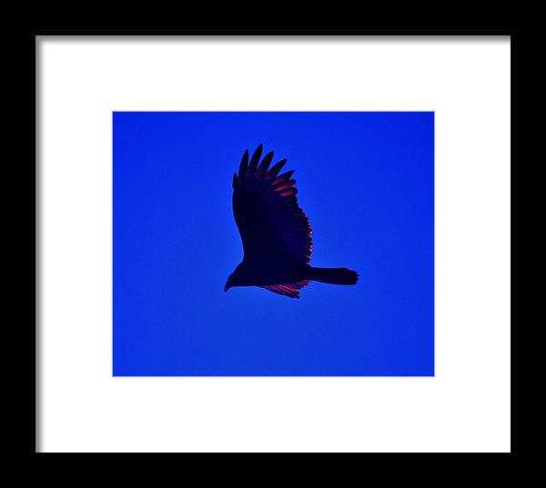 Seagull Framed Print featuring the photograph Flying High by Helen Carson