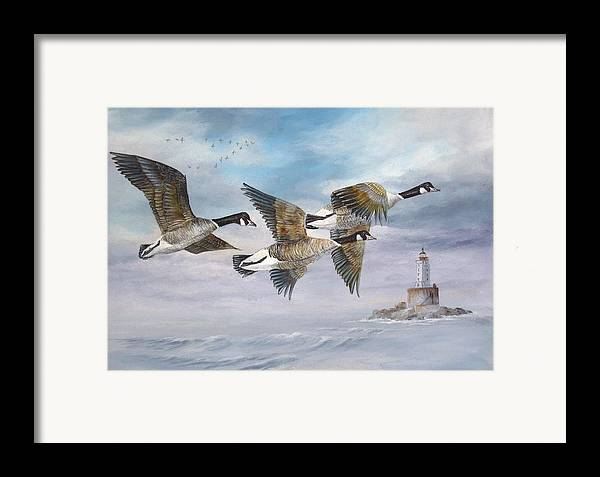 Aleutian Geese Framed Print featuring the painting Flying Home by Lynne Parker
