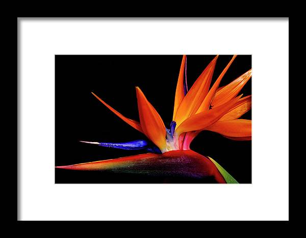 America Framed Print featuring the photograph Flying Orange by Eggers Photography