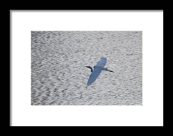 Flight Framed Print featuring the photograph Flying Over Water by Peter McIntosh