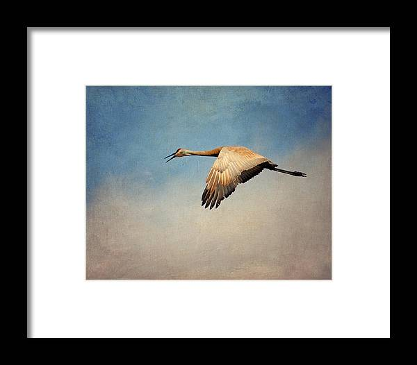 Sandhill Crane Framed Print featuring the photograph Flying Sandhill Crane by Al Mueller