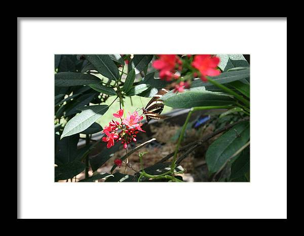 Black Framed Print featuring the photograph Focus In The Center - Black And White Butterfly by Lynn Michelle