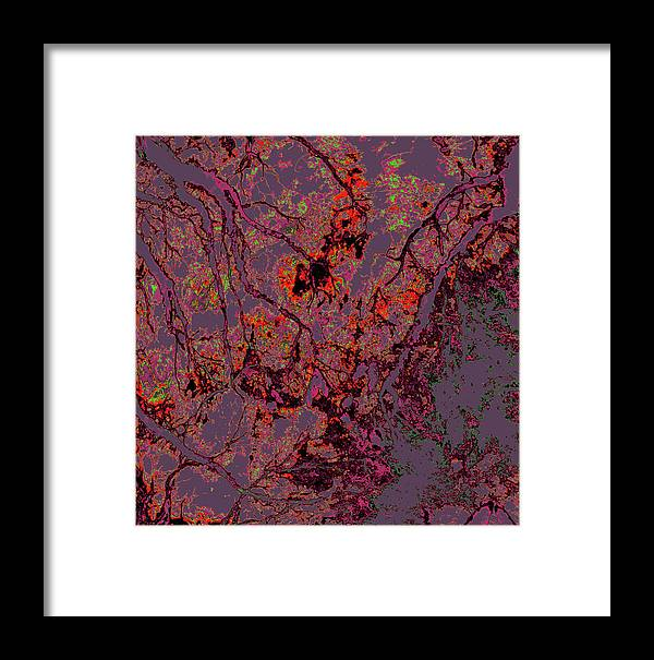 Trees Framed Print featuring the photograph Focus Of Attention 14 by Gary Bartoloni