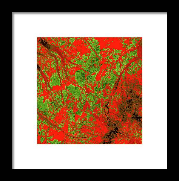 Trees Framed Print featuring the photograph Focus Of Attention 21 by Gary Bartoloni